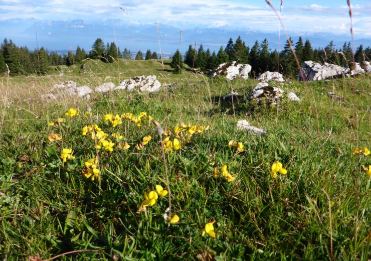Flowers of the Jura Mountains