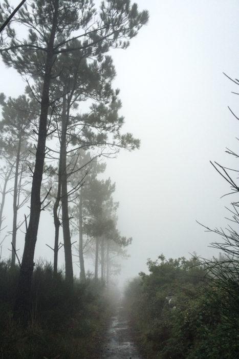 Primitivo Fog
