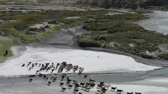 Goats crossing the Wakhan River