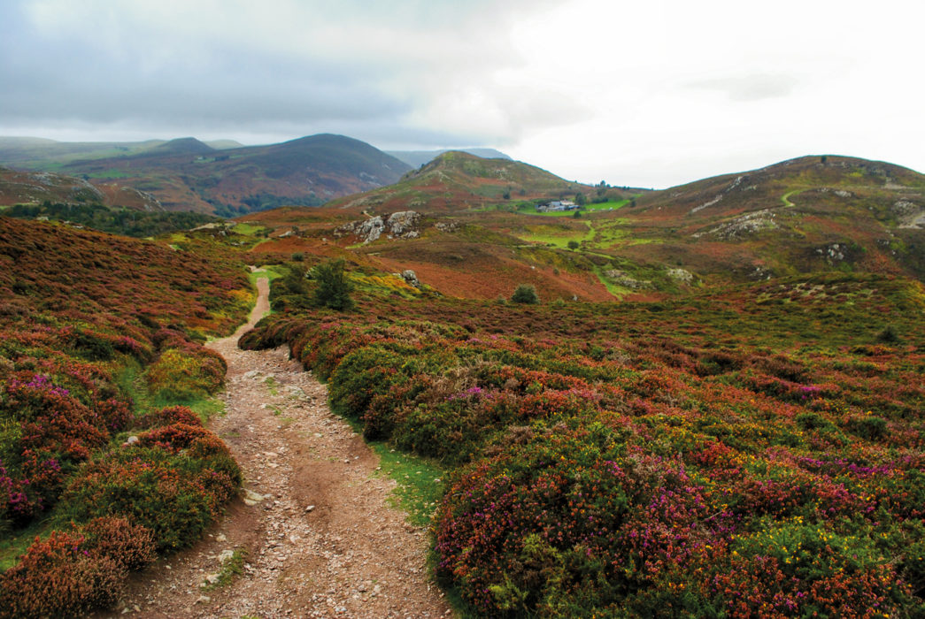 The Path Through The Rough Heather Hillsides Of Conwy Mountain