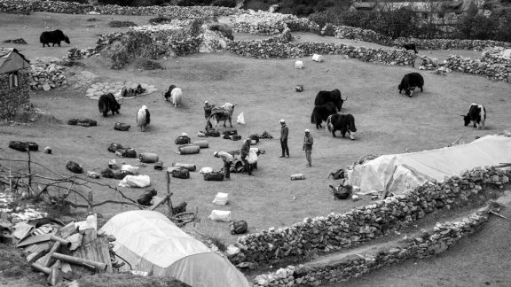 Yaks And Porters