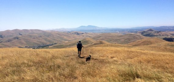 The author imagines he is in Montana on a training hike along the Bay Area Ridge Trail in California.