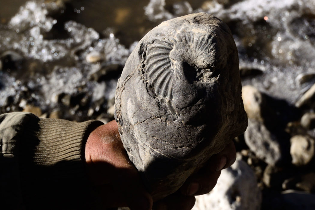The Kali Ghandaki is literally littered with fossil ammonites and squid.