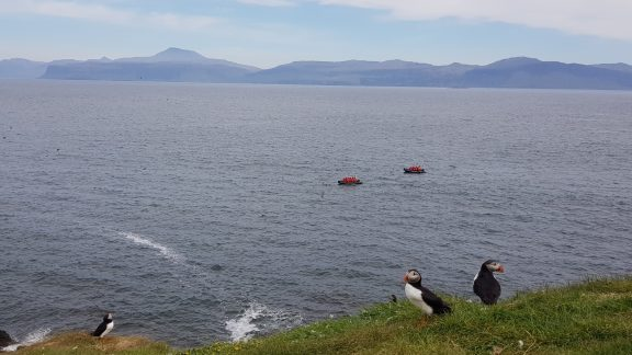 Puffins on Staffa, with the Mull coast beyond