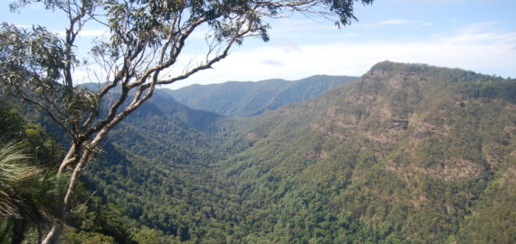 Into the Gondwana Rainforest: Walks in Lamington National Park on Australia's Gold Coast
