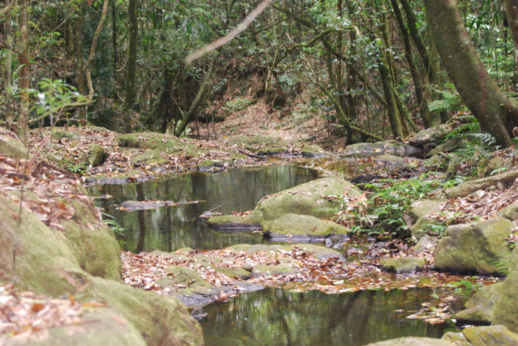 Yerralahla, the Blue Pool, the highlight of one of the most attractive stretches of West  Canungra Creek