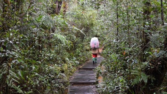 This is how supplies get to Laban Rata through dipterocarp forest
