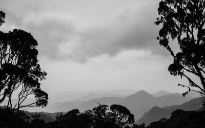 The foothills of the Rwenzori Mountains