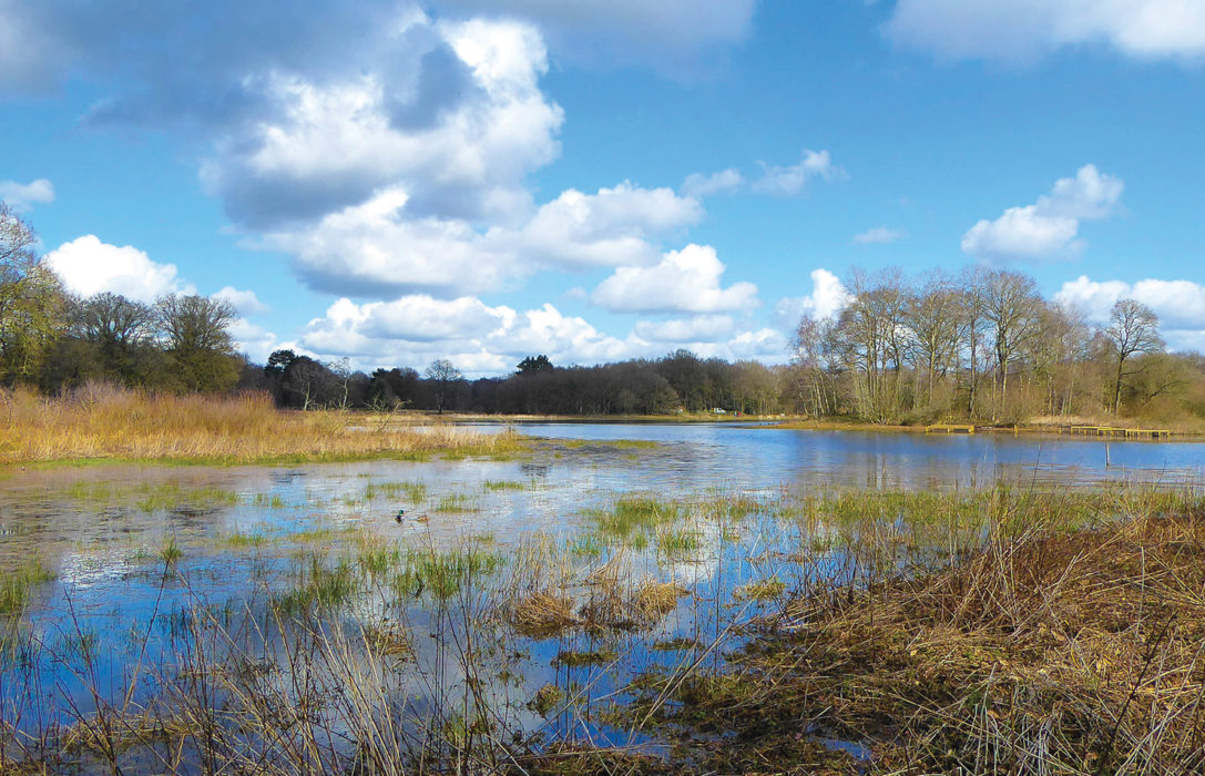 The main lake at Brown Moss Nature Reserve.