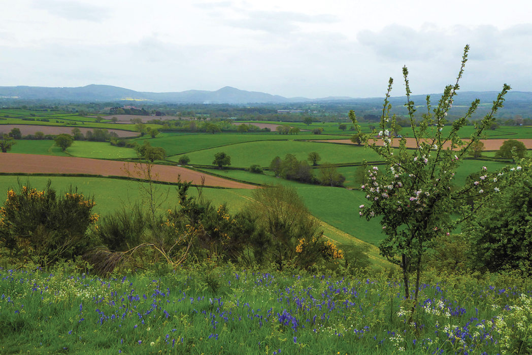 Lyth Hill in blossom. Although it is less than 170m above sea level, Lyth Hill, the first real hill on the walk, offers superb views over the surrounding hills and plains of Shropshire.