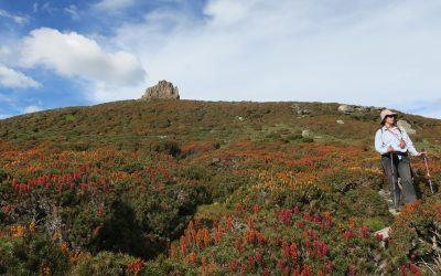 Mt Pelion