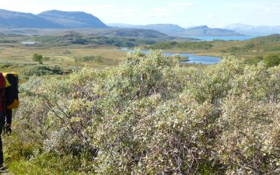 Trekking Padjelantaleden: Swedish Lapland with children