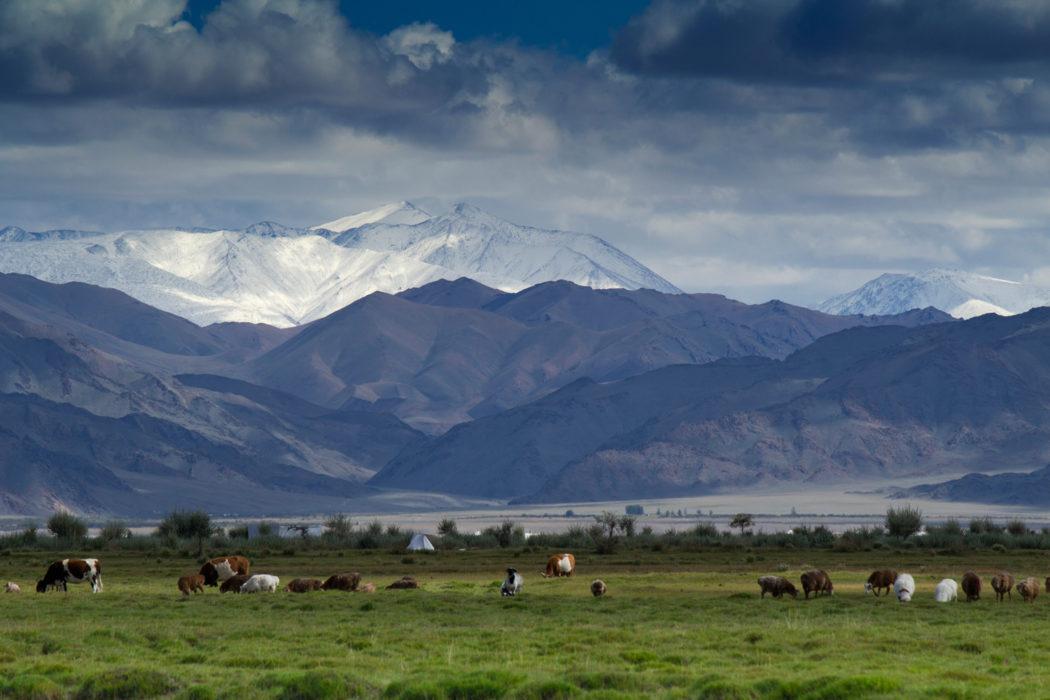 Lowland pastures