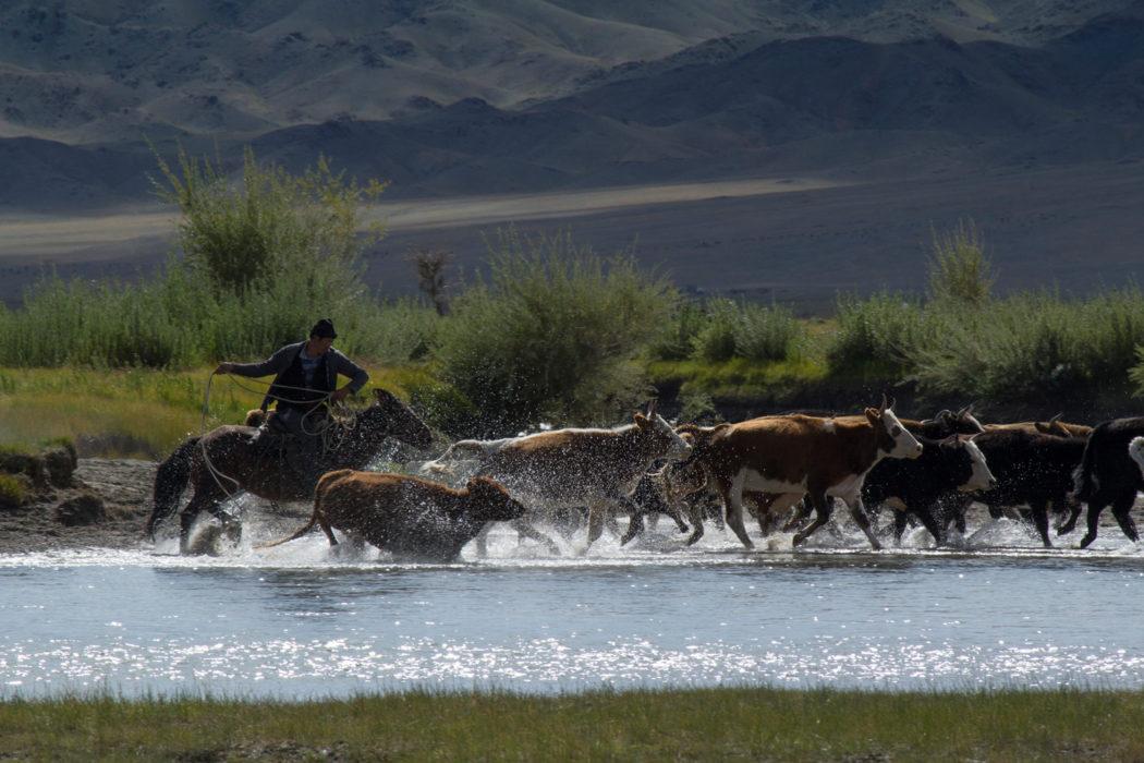 wild-west Mongolian