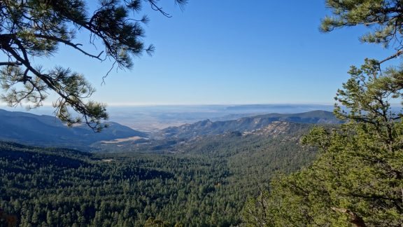 new mexico forest