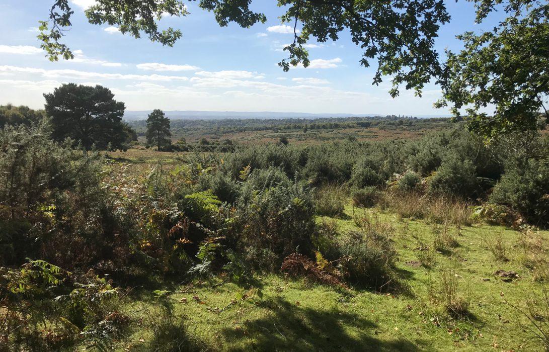 heathland and woodland