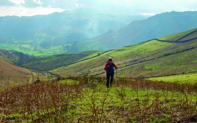UK ideas – stay safe, and stay wild
