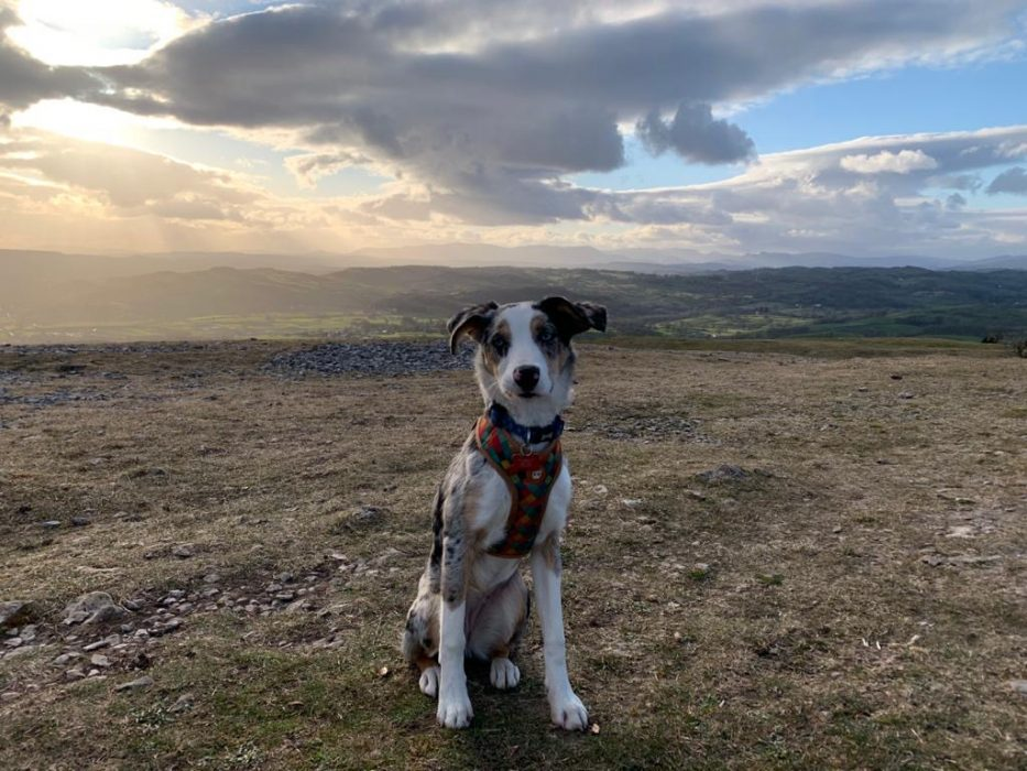 Tryfan enjoying the view of the Lake District from Scout Scar
