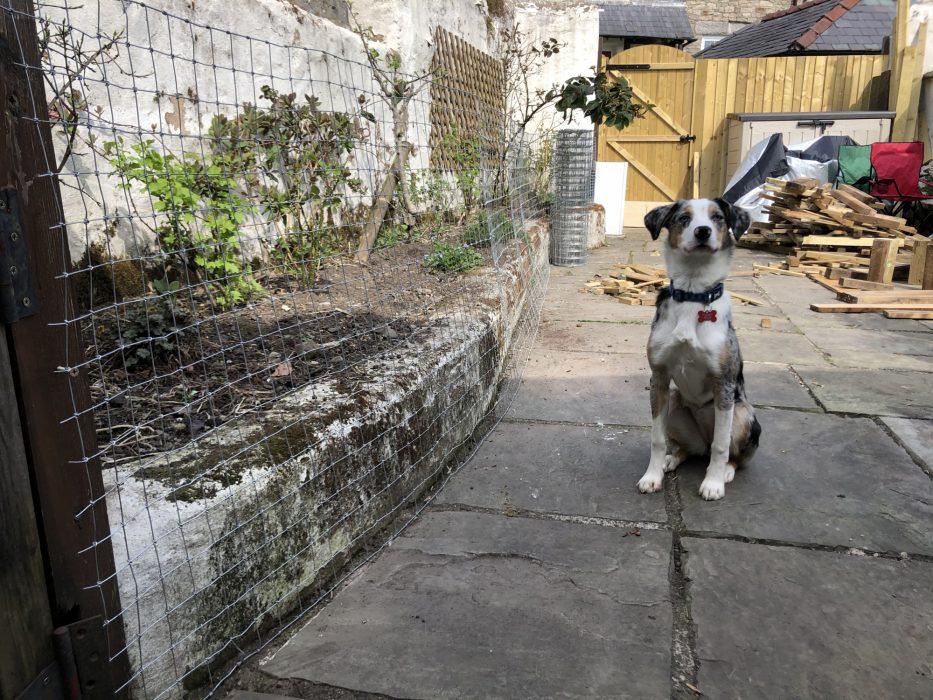 Tryfan in the back yard