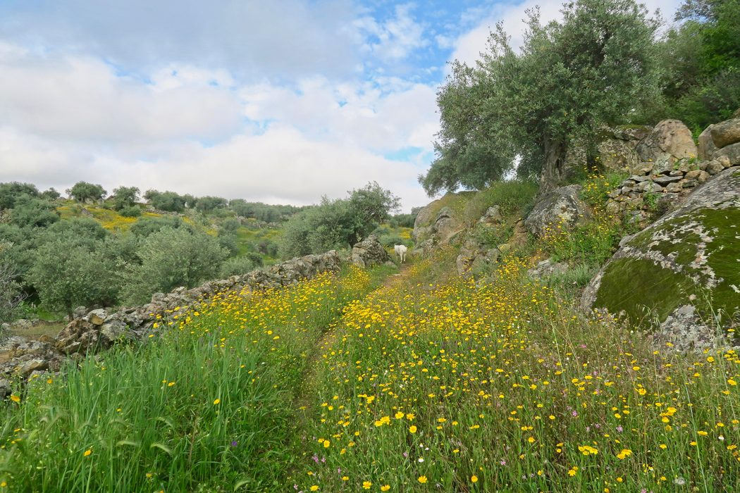 A footpath through flowers in Extremadura