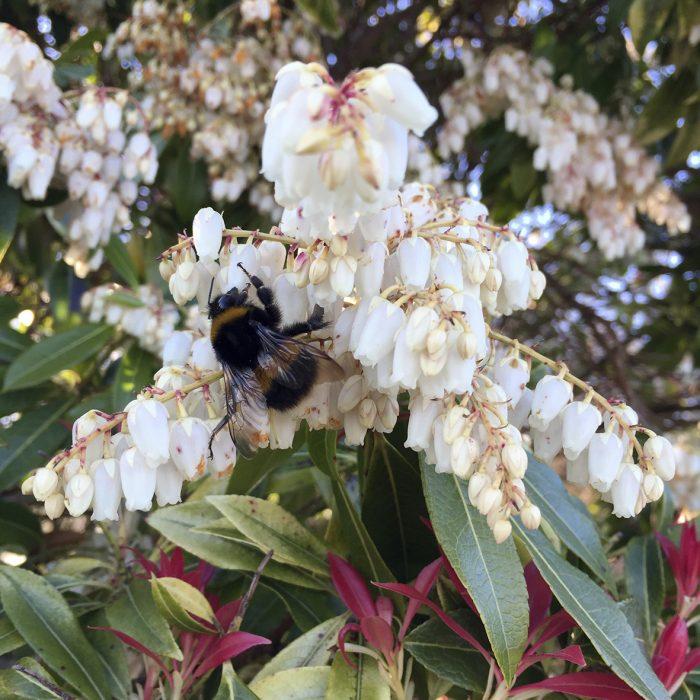 Bees in a garden in Cumbria