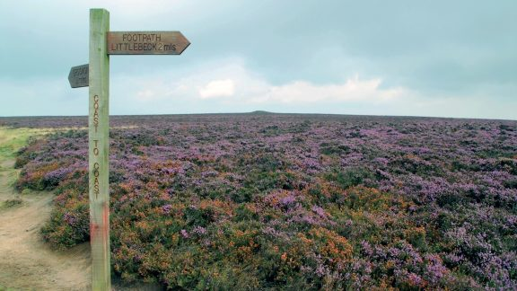 Heather moorlands. Taken from Terry's guidebook to the Coast to Coast