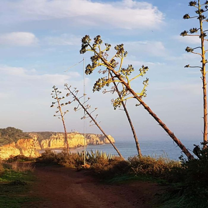 Alison Glennon  The Algarve book was updated just before our visit at Xmas 19. Brilliant coastal walking plus some hills