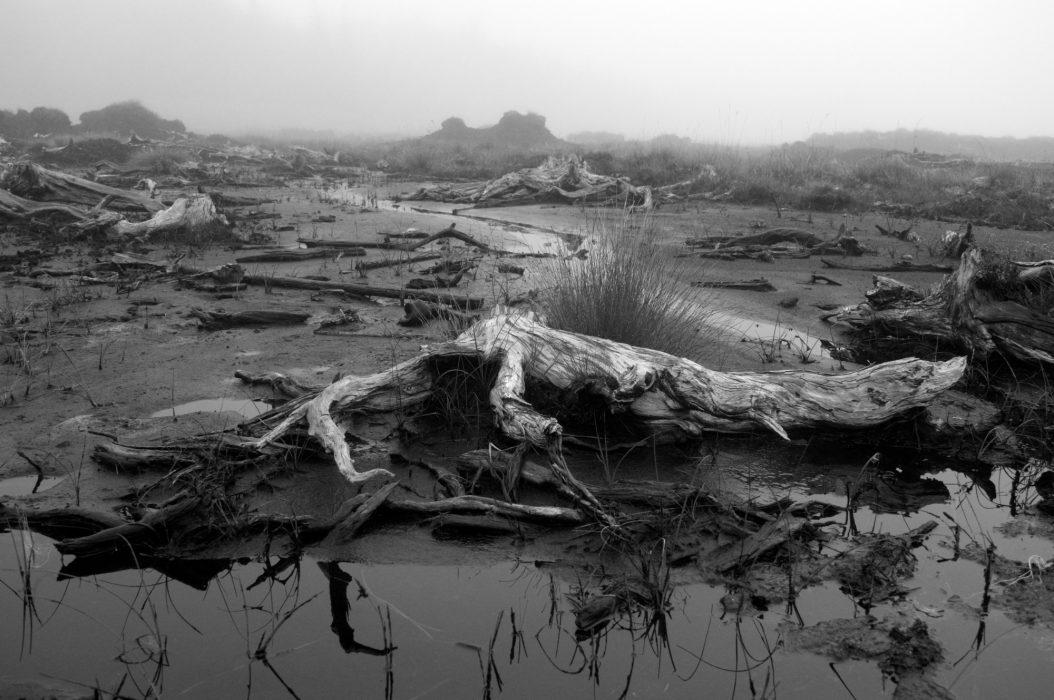 Peat preserved bog oak