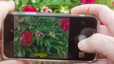 Smartphone Photography – 12 easy hacks for better pictures