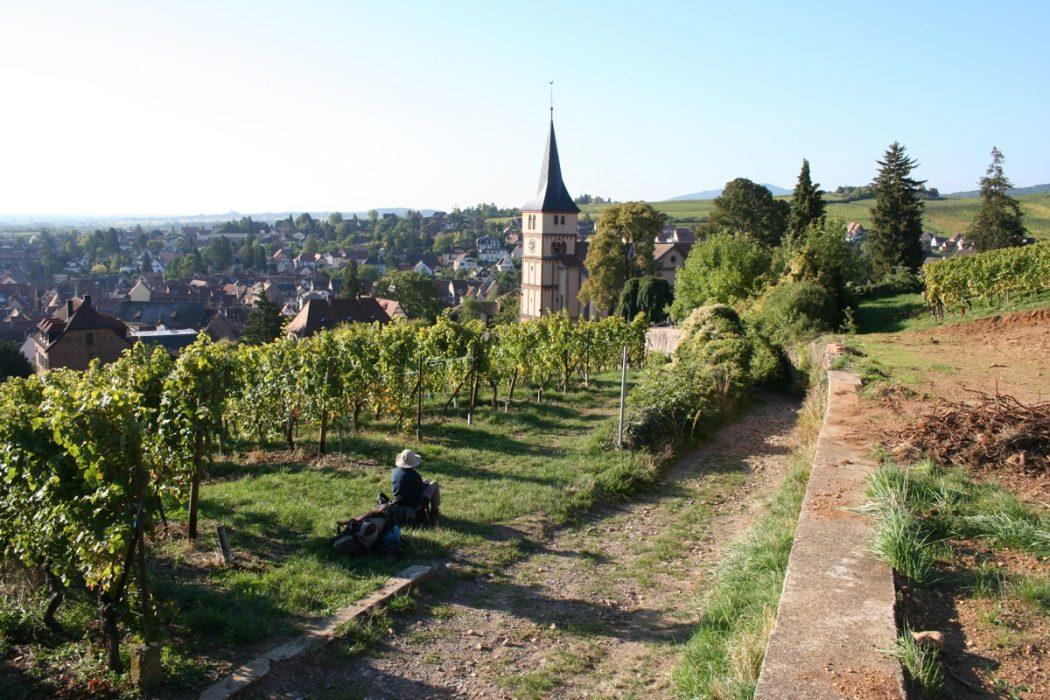 Vineyards By Barr Gr5