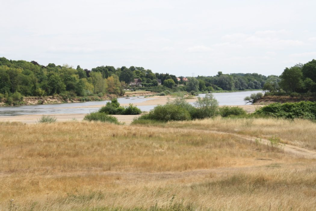 Low Water And Sun Bleached Grass At The Confluence Of Loire And Allier During 2015 Heatwave