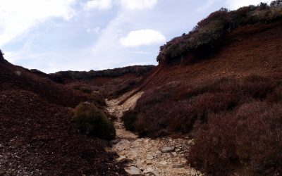 A Grough On  Kinder  Scout