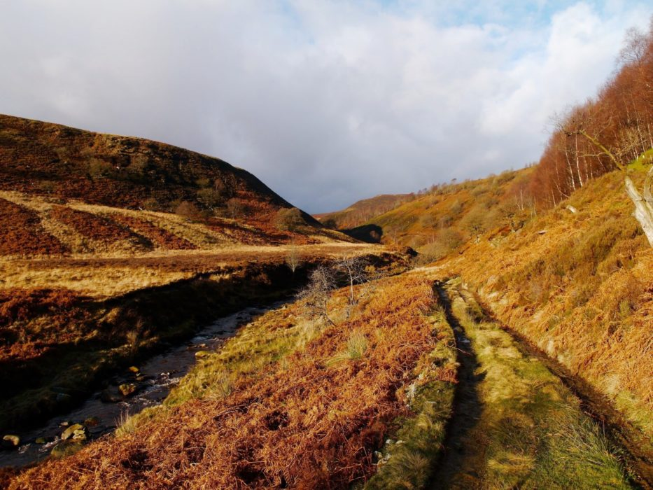Landside  Clough In The  Upper  Derwent  Valley
