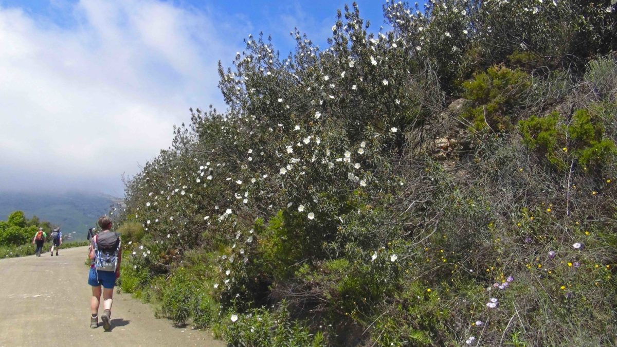 Wild Flowers On The  Andalucian  Coast To  Coast Trekking Route