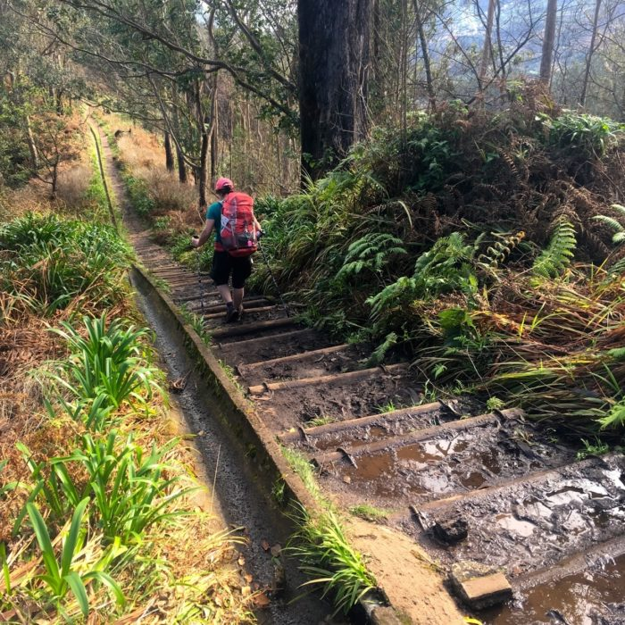 A Long Flight Of Log Steps Led Us Down To  Portela