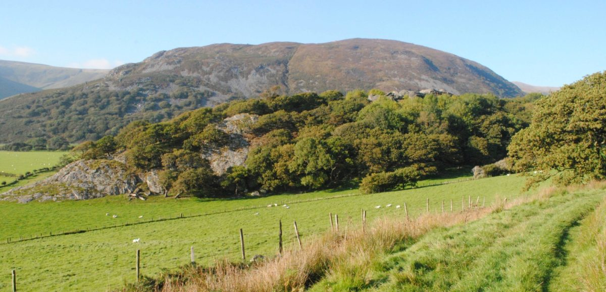 The Ruins Of  Castell Y  Bere Built By  Llewelyn The  Great Just Visible Poking Above The Trees