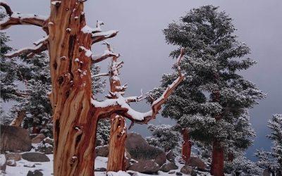 Snow  At  Chicken  Spring  Lake  Pct