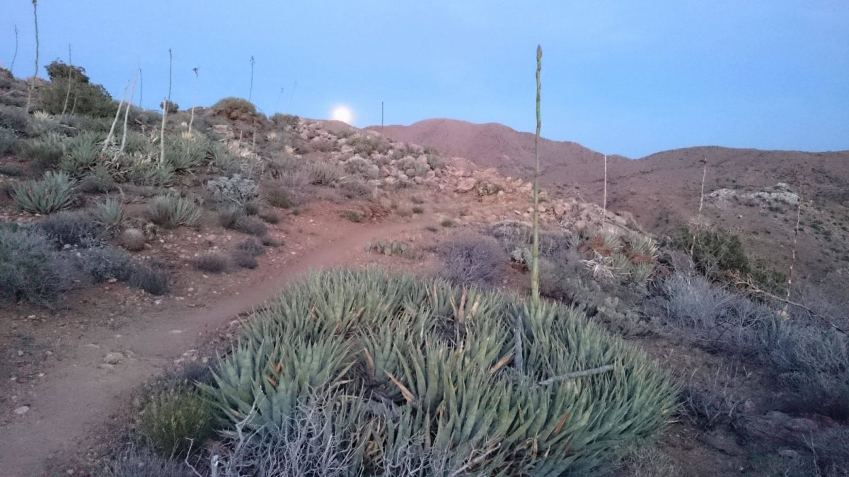 Anza  Borrego  Desert  At  Dusk  Pct