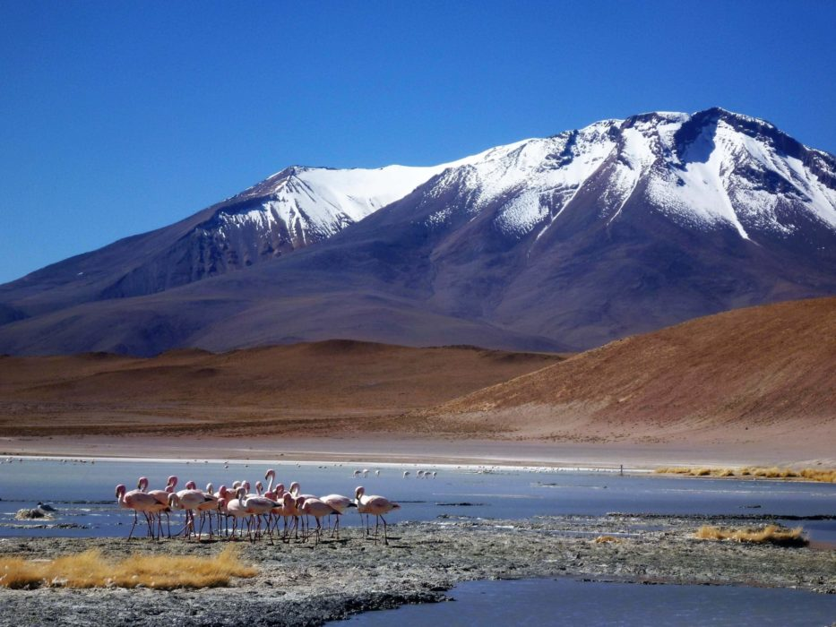 Flamingoes In  Bolivia