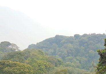 Cover  Montane Rainforest In  Rwandas  Nyungwe National Park