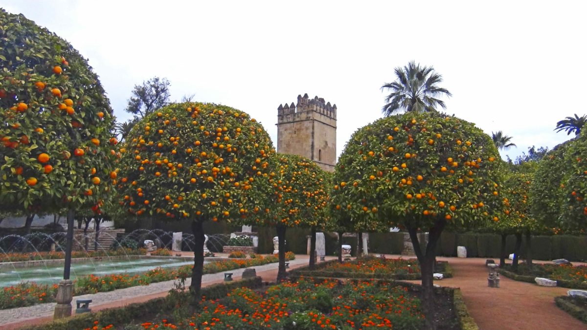 Orange Trees In The  Alcazar Gardens  Cordoba