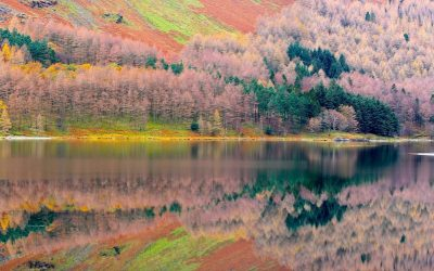 Autumn lakeshore In The Lake District