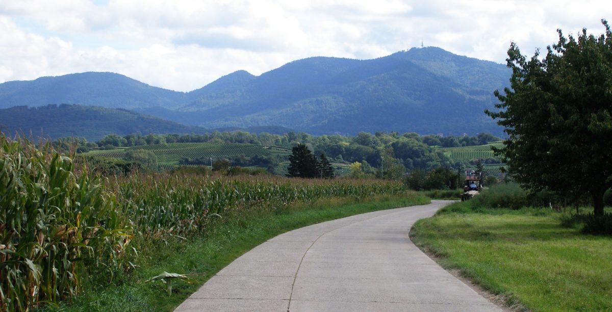 Along The  Rhine Route Near  Istein