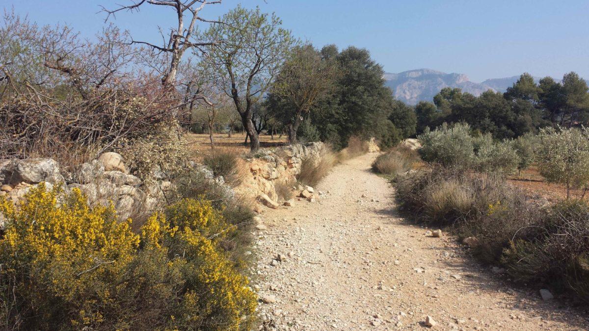 Terra  Alta Walk