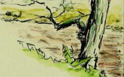 Findhorn  River
