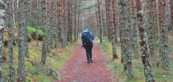 In search of wildlife on Speyside