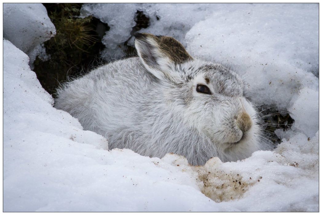 Jew Detector: Wildlife Of The Cairngorms And Speyside, Scotland