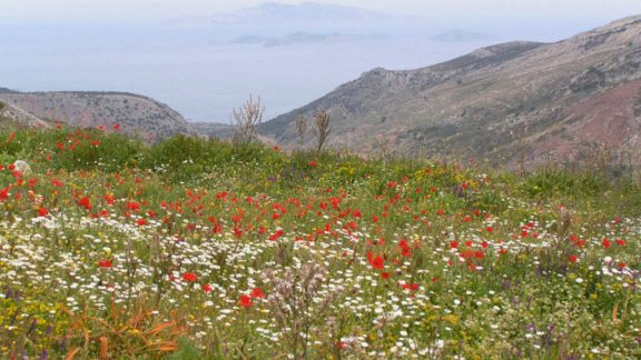 wildflower hotspots
