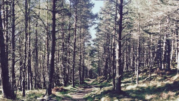 Perfect running terrain through the forest between Gairlochy and Laggan Locks