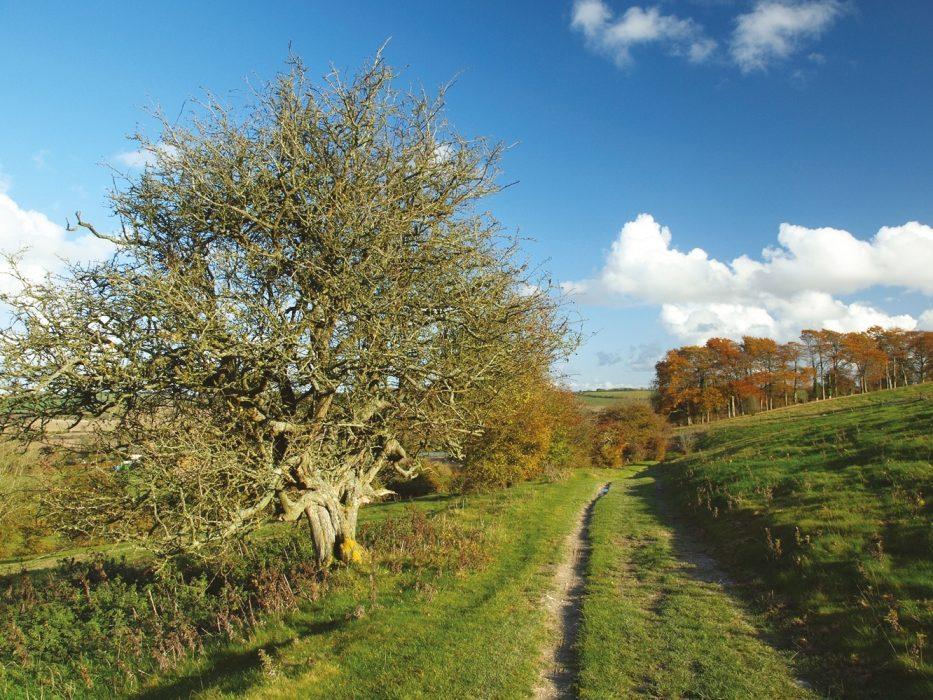 The Ridgeway towards Ogbourne St George